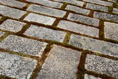 Moss paving Stock Photo