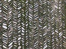 Moss Paving Stones Textura en un jardín chino foto de archivo