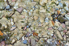 Moss and pebbles on the cracked earth. The moss and pebbles on the cracked earth royalty free stock photos