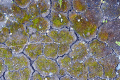 Moss and pebbles on the cracked earth. The moss and pebbles on the cracked earth royalty free stock images
