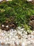 Moss and perlite Royalty Free Stock Image