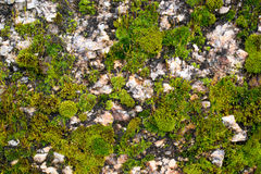 Moss. This photo was taken, when I was thinking about textures Stock Images