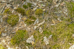 Moss, pine needles and dead leaves. Top view. Nature wallpaper. Stock Image