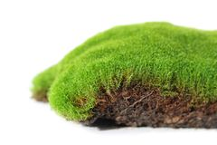 Moss, plant royalty free stock image