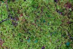 Moss Plant Texture Abstract Fotografering för Bildbyråer