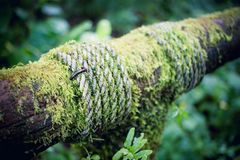 Moss plant on woods and rope Stock Photos