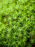 Moss Plants Stock Photo