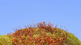 Moss plants against blue sky Stock Photography