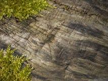 Moss. Plants and moss grow on bark tree royalty free stock photo