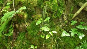 Moss and plants grow on hill Stock Photography