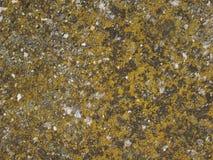 Moss plants on a rock. Green Moss (Plantae Bryophyta) on a rock Stock Image