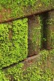 Moss Plants-textuur Royalty-vrije Stock Afbeeldingen