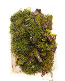 Moss and plants on white background Royalty Free Stock Photos