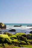 moss pokryć skał Fotografia Stock