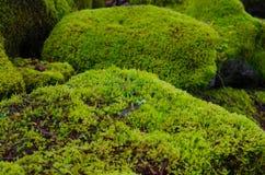 Moss räknade stenblock Arkivbilder