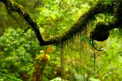 Moss in rain forest Stock Photos