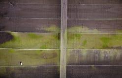 Moss Rising verde húmedo encima de la cerca de madera Foto de archivo libre de regalías
