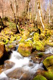 Moss River Stock Image