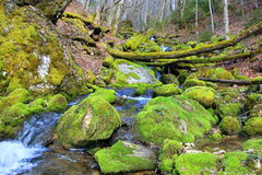 Moss River Stock Images