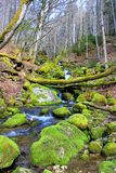 Moss River Royalty Free Stock Images