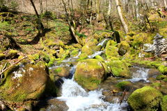 Moss River Royalty Free Stock Photography