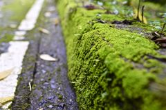 Moss in the road Stock Photography