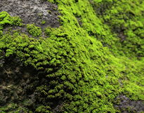 Moss on rock stock photos