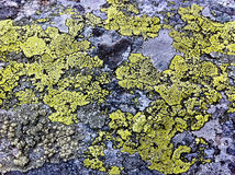 Moss on a rock. Green moss on a rock wall Royalty Free Stock Photos