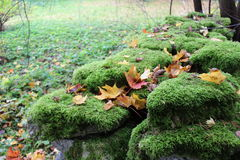 Moss rock Royalty Free Stock Image