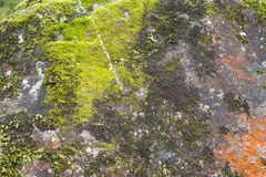 Moss on rock Royalty Free Stock Photos