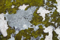 Moss on Rock Background Texture. Moss and Fungus on Surface of Rock Royalty Free Stock Photography