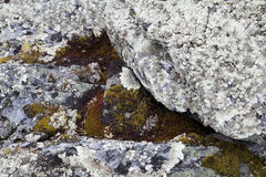 Moss on Rock Background Texture Stock Image