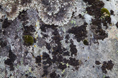 Moss on Rock Background Texture. Moss and Fungus on Surface of Rock Royalty Free Stock Images
