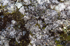 Moss on Rock Background Texture Royalty Free Stock Images
