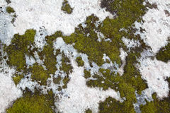 Moss on Rock Background Texture Stock Photo