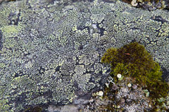 Moss on Rock Background Texture. Moss and Fungus on Surface of Rock Royalty Free Stock Photo