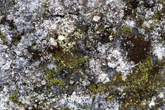 Moss on Rock Background Texture Stock Images