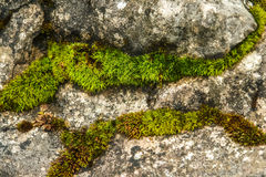 Moss on the rock Royalty Free Stock Photos