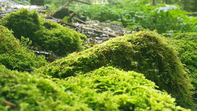 Moss on the rock Royalty Free Stock Image