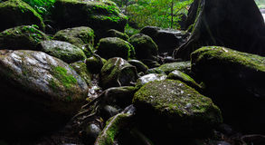 Moss on rock in forest. In Thailand Royalty Free Stock Images