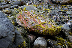 Moss on rock Royalty Free Stock Photography