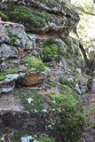 Moss on a Rock. I took this Picture in Mineral Wells State Park Royalty Free Stock Images