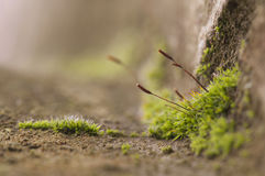 Moss on rock Stock Photography