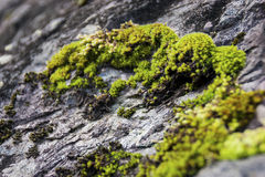 Moss on a rock Royalty Free Stock Photos