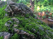 Moist rock work with moss royalty free stock photography