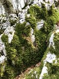 Moss on rock Royalty Free Stock Images