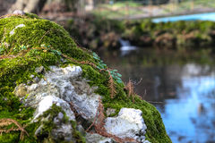 Moss on rock Royalty Free Stock Image