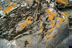 Moss on the rock in mountain. Wallpaper, background Royalty Free Stock Photo