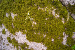 Moss 2. Moss on rock springtime sweden Royalty Free Stock Photography