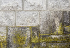 Moss on rock tiles Royalty Free Stock Photo
